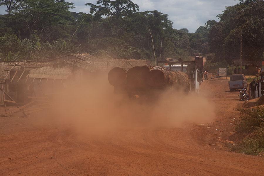 Enorme boomstammen verdwijnen uit het woud van Kameroen