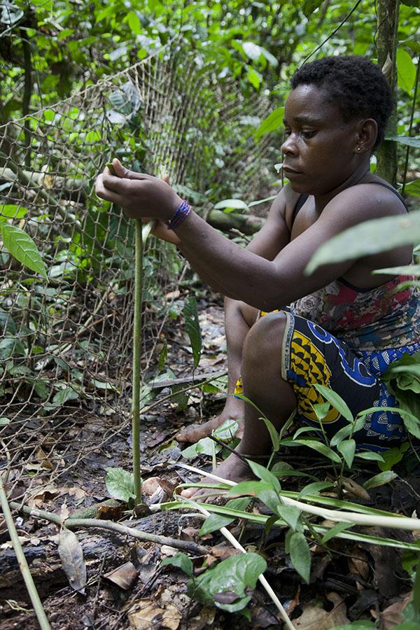 Pygmee vrouw laat de geheimen van het oerwoud zien