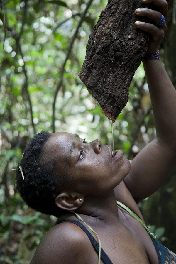 Pygmee vrouw drinkt uit een boom