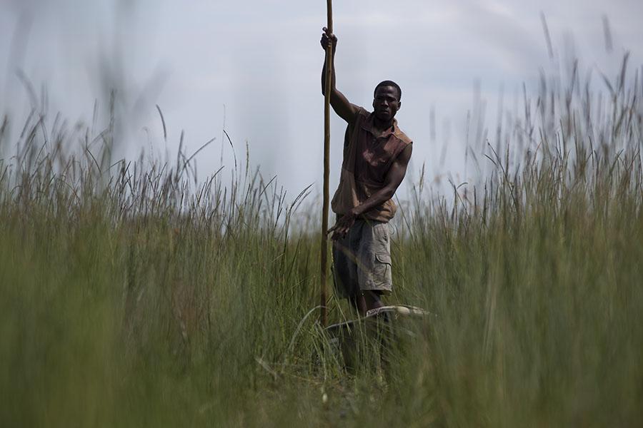 Met de mokoro door het hoge gras van de Okavango
